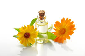 CALENDULA IN SURGICAL PRACTICE