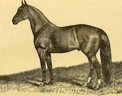 ARSENIC FOR HORSES