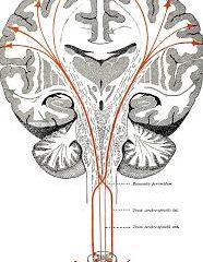 SOME ADVANCE STUDIES FOR MENINGITIS CEREBRO-SPINALIS