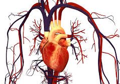 DISEASES OF THE CIRCULATION – THEIR CAUSE AND TREATMENT