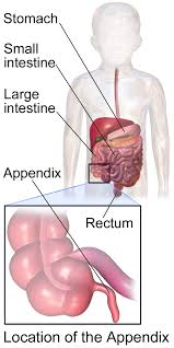 SOME REMARKS ON APPENDICITIS